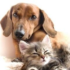 Аллергический дерматит у собак и кошек