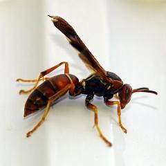 Аллергия на укусы насекомых и ее