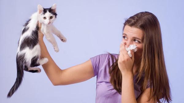 аллергия на шерсть отзывы