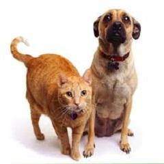 Атопический дерматит у собак и кошек: лечение