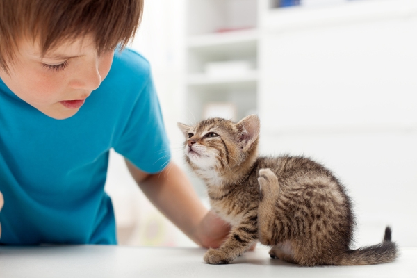 блошиный дерматит у кошек