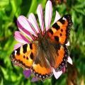 Дерматографическая крапивница: симптомы и лечение