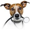 Как лечить экзему у собак?