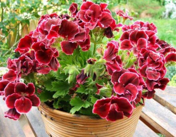комнатные растения вызывающие аллергию
