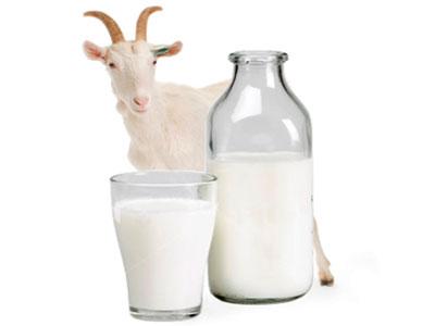 козье молоко аллергии коровье молоко
