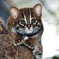 Милиарный дерматит у кошек: симптомы и лечение
