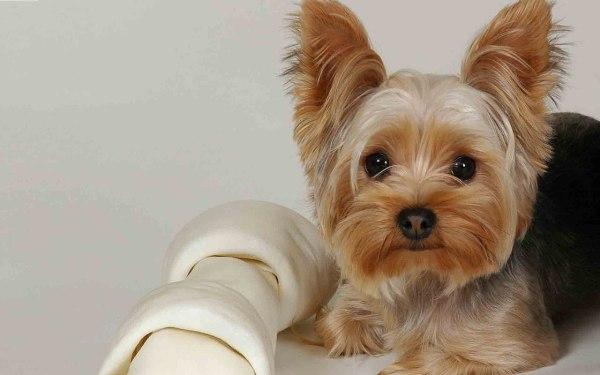 собаки не вызывающие аллергию