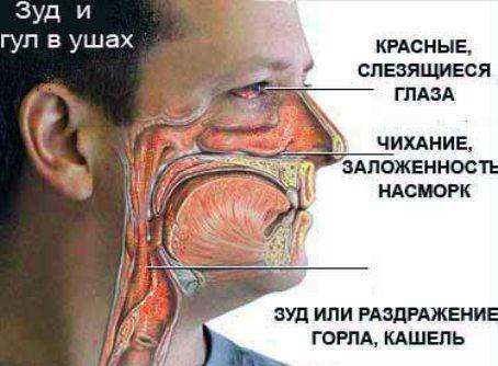 аллергия на лебеду