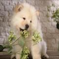 Существуют ли собаки, не вызывающие аллергию