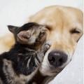 Аллергия на животных: симптомы и лечение