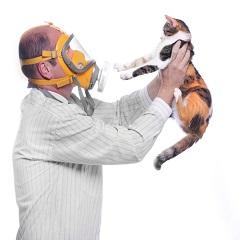 Аллергия на кошек: симптомы и способы лечения