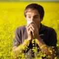 Аллергия на полынь: лечение и симптомы