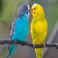 Аллергия на попугаев — симптомы