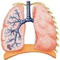 Экзогенный аллергический альвеолит: симптомы и лечение