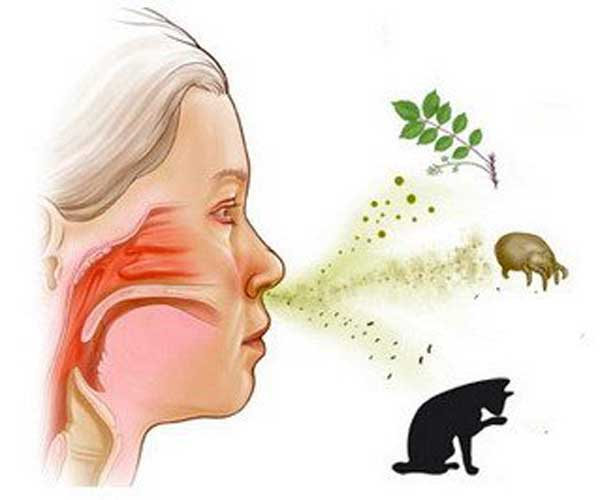 Механизм действия антигистаминных препаратов при аллергии