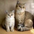 Антигистаминные препараты для кошек: краткий обзор