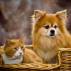 Блошиный дерматит у собак и кошек: симптомы, лечение