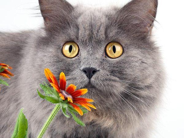 бронхиальная астма у кошек