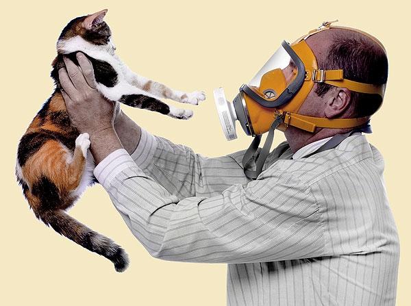 Как вылечить аллергию на кошек