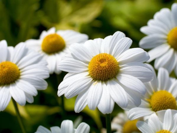 народные средства при аллергическом дерматите