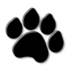 Межпальцевый дерматит у собак и его лечение