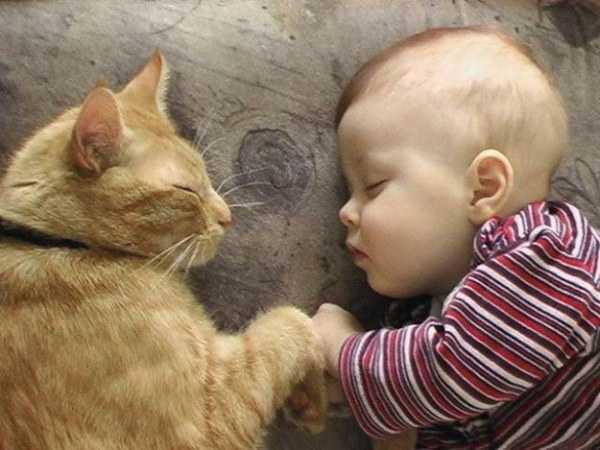кошки для аллергиков и астматиков