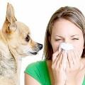 Породы собак для астматиков и аллергиков