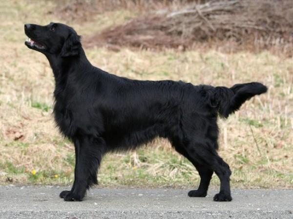 собака для астматика