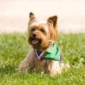Есть ли собаки для аллергиков и астматиков